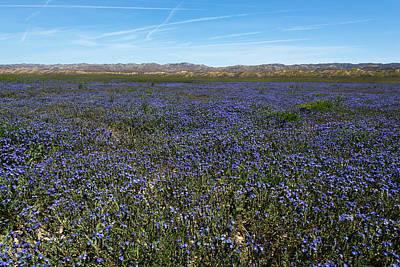 Photograph - Purple Wildflower Field by Scott Cunningham