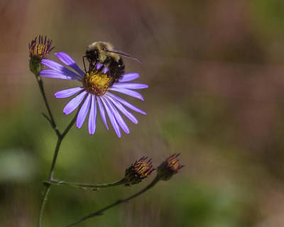 Photograph - Purple Wildflower With Bee by Judy Garrard