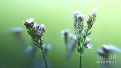 Photograph - Purple Wildflowers by Janice Spivey