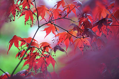 Photograph - Purple Wind And Red Leaves by Jenny Rainbow