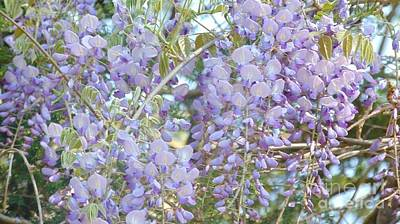 Photograph - Purple Wisteria by Charlotte Gray