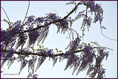 Photograph - Purple Wisteria by Sonali Gangane