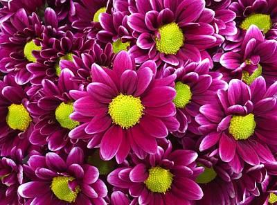 Photograph - Purple Yellow Flowers by Lawrence S Richardson Jr