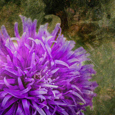 Outerspace Patenets Rights Managed Images - Purple Zinnia Royalty-Free Image by Rod Sterling