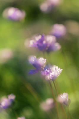 Photograph - Purplehead Glow by Alexander Kunz
