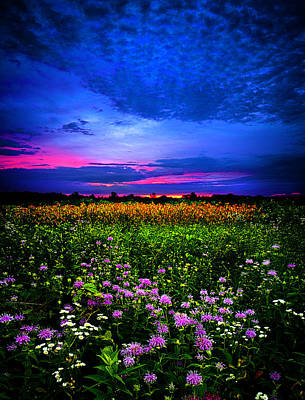 Environement Photograph - Purples by Phil Koch
