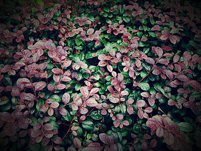 Flower In Rain Wall Art - Photograph - Purplish Red Leaves by Kathleen Wong