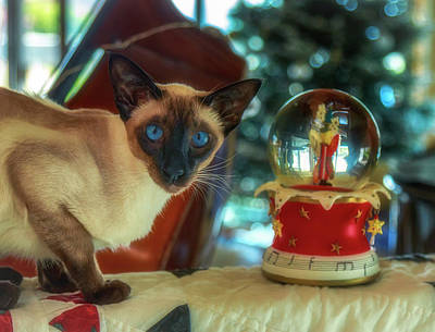 Photograph - Purr-fect Christmas by Jade Moon
