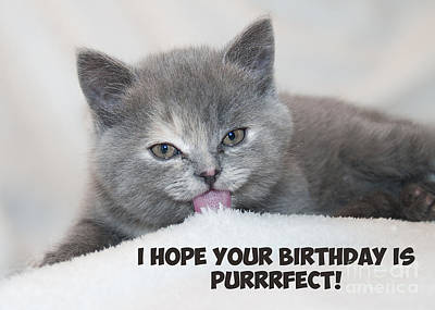 Digital Art - Purrfect Birthday Cat by JH Designs