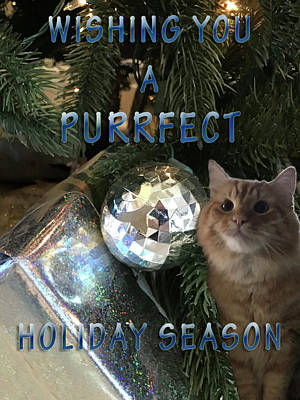 Photograph - Purrfect Holiday by Karen Zuk Rosenblatt