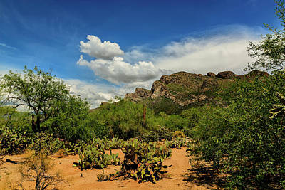 Mark Myhaver Rights Managed Images - Pusch Ridge Vista h14 Royalty-Free Image by Mark Myhaver