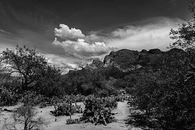 Mark Myhaver Royalty Free Images - Pusch Ridge Vista h15 Royalty-Free Image by Mark Myhaver