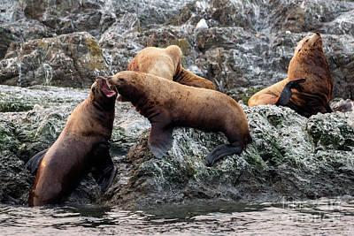 Sea Lion Photograph - Push Comes To Shove by Mike Dawson