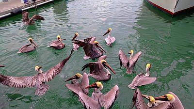 Photograph - Pushy Pelicans by JAMART Photography