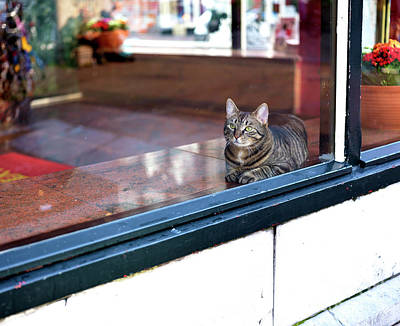 Photograph - Pussycat In The Window by John Rizzuto
