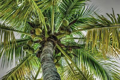 Photograph - Put The Lime In The Coconut by Donna Kennedy