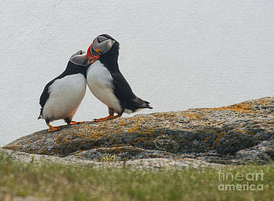 Puffin Digital Art - Put You're Head On My Shoulder by Jim  Hatch