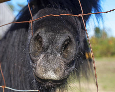 Photograph - Putting Its Nose In Your Business Black Pony by Toby McGuire