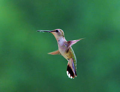 Tiny Bird Photograph - Putting On The Brakes  by Jeff Swan