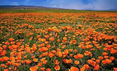 Photograph - Putting On The Poppies by Lynn Bauer