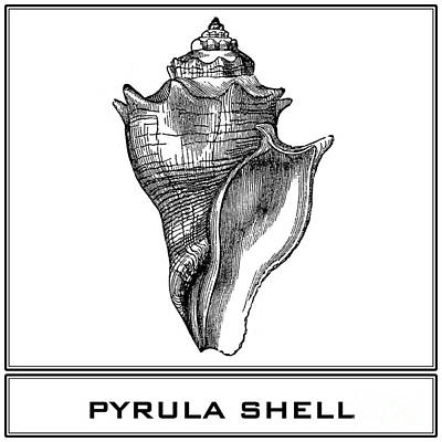 Digital Art - Pyrula Shell by Scott and Dixie Wiley