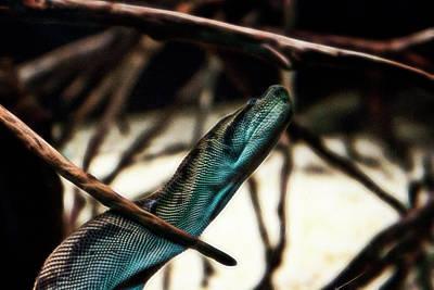 Photograph - Python by Miroslava Jurcik