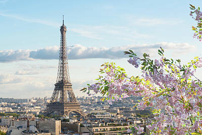 Photograph - Spring Blossoming In Paris by Anastasy Yarmolovich