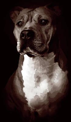 Pitbull Painting - Quad Tone Pitbull Portrait by Elaine Plesser