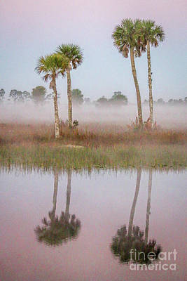 Photograph - Quadruple Double Palms by Tom Claud