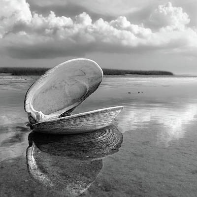 Photograph - Quahog by Dapixara Art