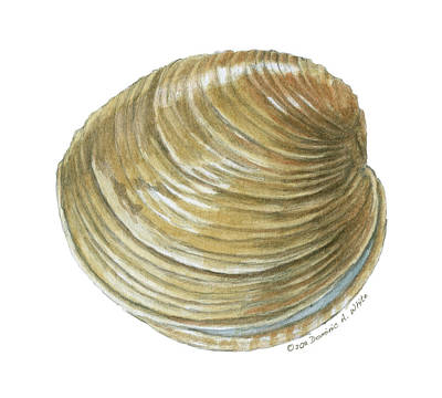 Painting - Quahog Shell by Dominic White