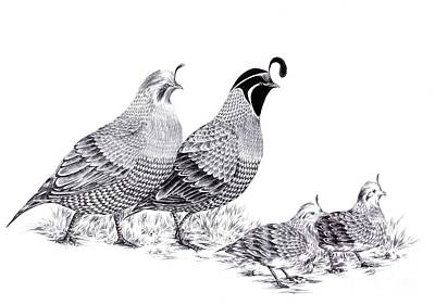 Drawing - Quail Family Evening Stroll by Alice Chen