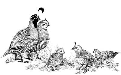 Drawing - Quail Family Outing by Alice Chen