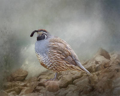 Mixed Media - Quail On The Rocks by Teresa Wilson