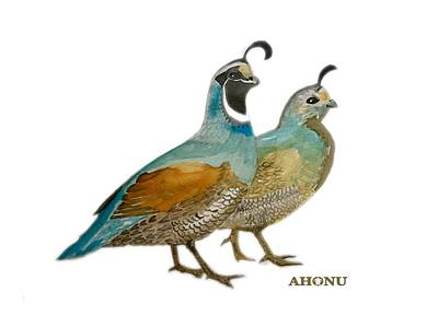 Painting - Quail Pair by Ahonu