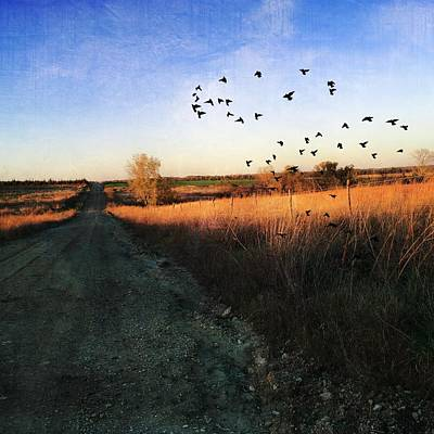 Photograph - Quail Road Photography Art by Michele Carter