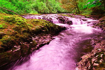 Silver River State Park Photograph - Quaint Water by Jeff Swan