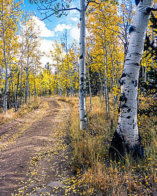 Photograph - Aspens In Fall With Road by John Brink