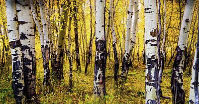 Quakies In Autumn Art Print by TL Mair