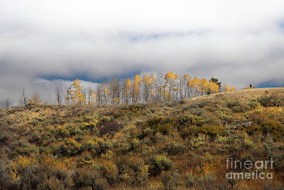 Photograph - Quaking Aspen Tree Landscape, Grand Teton National Park, Wyoming by Greg Kopriva