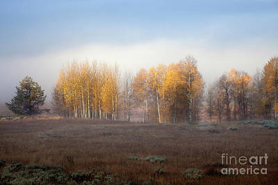 Photograph - Quaking Aspen Trees At Dawn, Grand Teton National Park, Wyoming by Greg Kopriva
