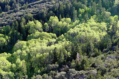 Photograph - Quaking Aspen Trees, Great Basin National Park, Nevada by Robert Mutch