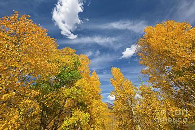 Photograph - Quaking Aspens In Autumn by Yva Momatiuk John Eastcott