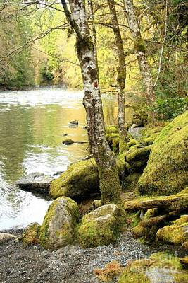 Photograph - Qualicum River by Frank Townsley