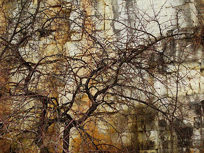 Photograph - Quarry Tree Abstract by David T Wilkinson