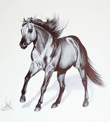 Quarter Horse At Lope Art Print