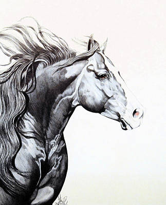 Drawing - Quarter Horse Head Shot For Show by Cheryl Poland