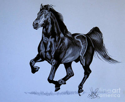 Drawing - The Black Quarter Horse In Bic Pen by Cheryl Poland