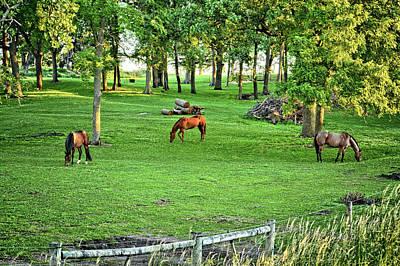 Photograph - Quarter Horse Pasture 2 by Bonfire Photography