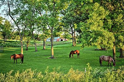 Photograph - Quarter Horse Pasture by Bonfire Photography